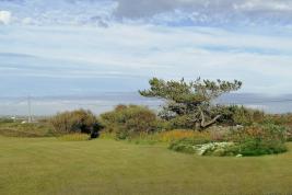 Moorside tree 1200 800